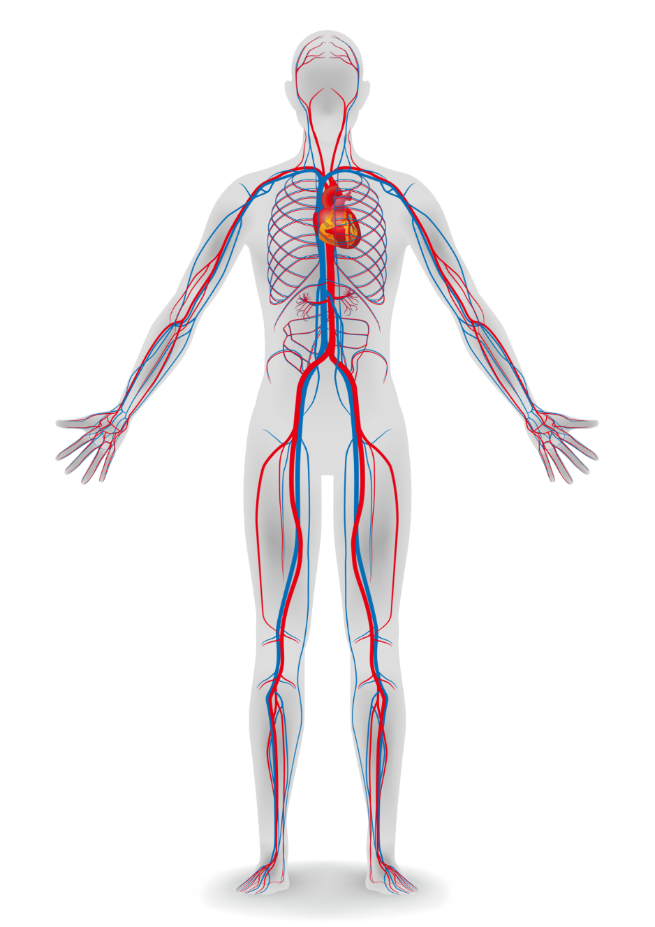 Full Body Diagram